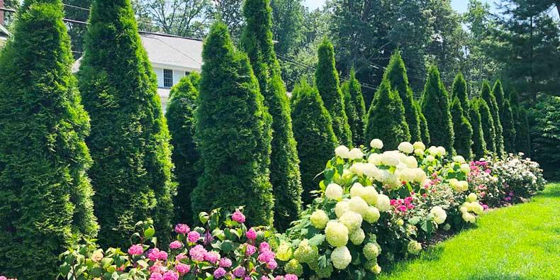 plantations en limite de propriété